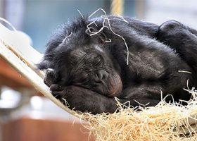 Gutschein Stuttgarter Zoo Wilhelma